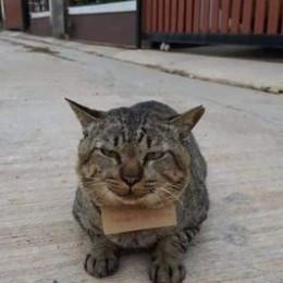 Gato desaparecido vuelve a casa